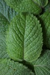 aromatherapy recipes, easy aromatherapy, diy skincare recipes, peppermint, peppermint essential oil // MeredithTested.wordpress.com