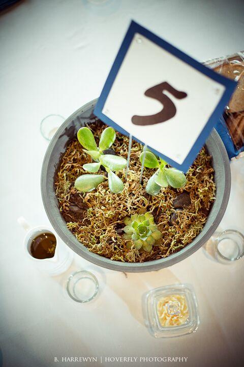succulent center pieces